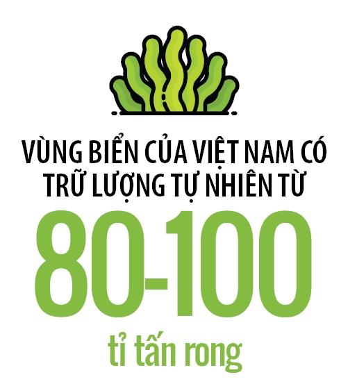 Rong Viet vs rong Nhat