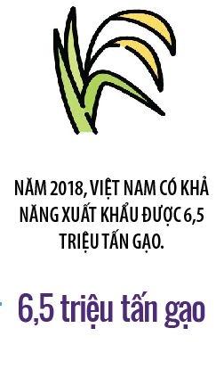 Hiep hoi Xuat khau gao Viet Nam: Tai sao khong?