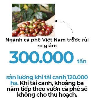 Ca phe Viet Nam truoc nguy co
