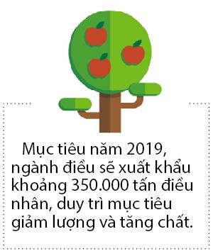 Xuat khau dieu Viet Nam 2018 van dung so 1 the gioi