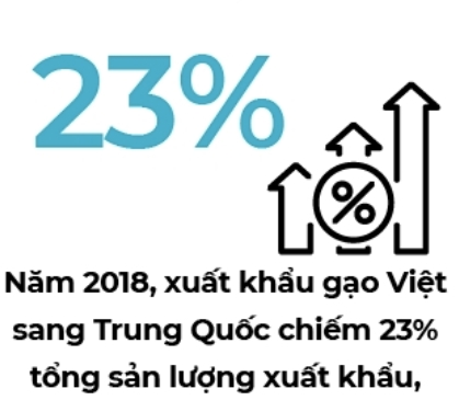 Tim thi truong cho gao Viet