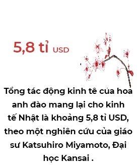 Hoa anh dao: Mo vang lo thien cua kinh te Nhat