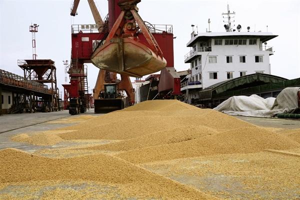 Trung Quốc đã hủy đơn hàng đậu nành từ Mỹ, thay vào đó là mua một loại nông sản khác. Ảnh: Reuters