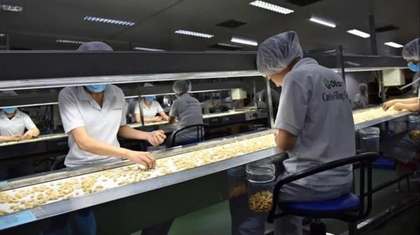 Nhà máy chế biến hạt điều của Olam tại Đồng Nai. Ảnh: Nikkei Asia Review