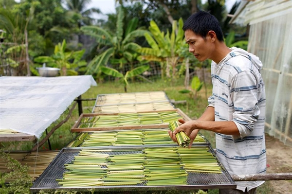 Tran Minh Tien, owner of 3T shop, dries grass straws in front of his house in Long An province. Photo: Reuters