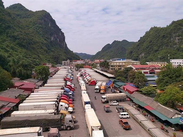 Hàng trăm container trái cây sang Trung Quốc phải quay đầu vì đóng cửa khẩu. Ảnh: Nld.com.vn