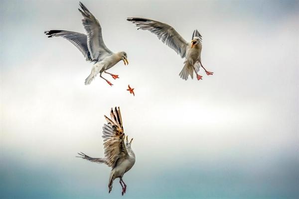 Bức ảnh của tác giả người Pháp Caroline Paux vào chung kết thể loại Thế giới tự nhiên và động vật hoang dã.