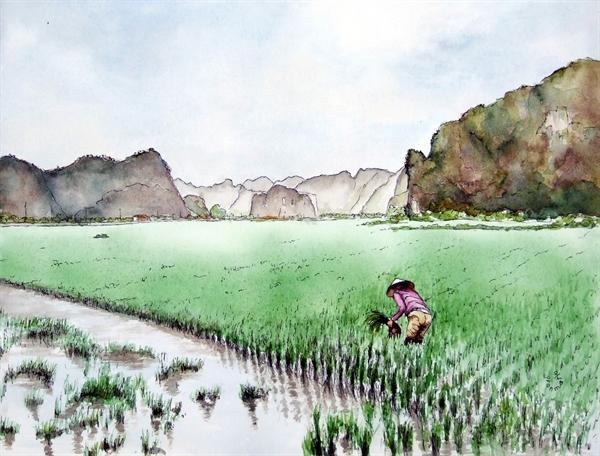 Cảnh làm đồng của người dân ở Hoa Lư, Ninh Bình rất mộc mạc, giản dị đã lọt vào tầm ngắm của du khách Pháp. Mỗi năm 2 mùa lúa, đây cũng là cảnh thường thấy ở các tỉnh đồng bằng miền Bắc Việt Nam.