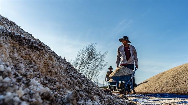 người nông dân làm muối bán mặt cho đất, bán lưng cho trời. Họ vẫn giữ được sự lạc quan trên gương mặt khắc khổ, chất phác.