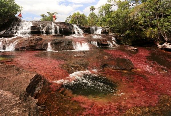 Sông Cano Cristales ở Colombia đôi khi được gọi là