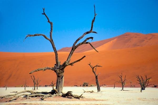 Deadvlei là một chảo đất sét trắng ở Namibia. Khi mặt trời chạm vào cồn cát, phần còn lại của những cây gai lạc đà trông giống như chúng đang ở trên một phông nền được sơn.