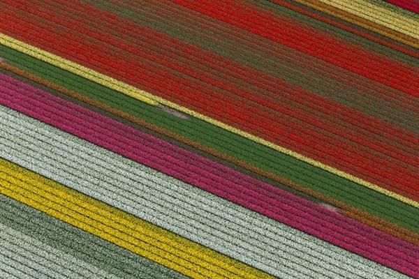 Cánh đồng hoa của Keukenhof là do con người tạo ra, nhưng những đường hoa đầy màu sắc lại là sự kết hợp đầy hoàn hảo của những cánh đồng hoa. Mỗi mùa xuân, công viên Keukenhof ở Hà Lan  nở rộ với hàng triệu bông hoa tulip , cũng như lục bình, thủy tiên và các loài hoa khác.