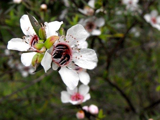Năm 2019, thị trấn này sản xuất 15,5 tấn mật ong Manuka. Nguồn ảnh: New Zealand Vacations
