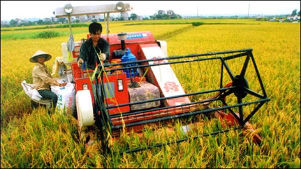 Đảm bảo lương thực, thực phẩm trong mọi tình huống là nhiệm vụ cấp bách Chính phủ giao cho ngành nông nghiệp khi dịch COVID-19 gây nhiều ảnh hưởng. Ảnh minh họa.