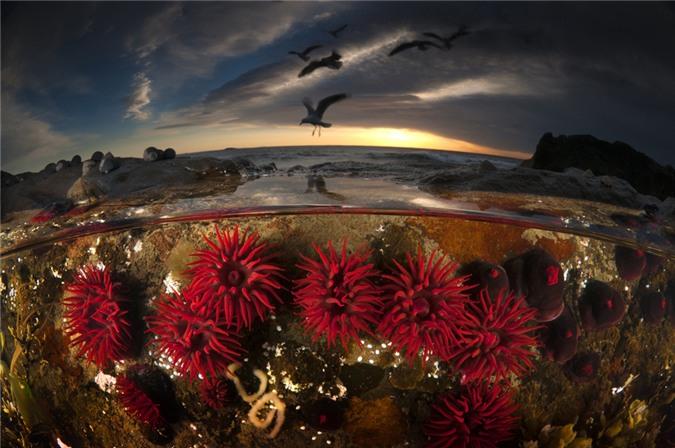 Những bức ảnh thiên nhiên kỳ diệu nhất thế giới của NatGeo 2013 (Phần 1)