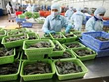 Đứng thứ 3 thế giới, VN xuất khẩu tôm đạt 2,5 tỷ USD