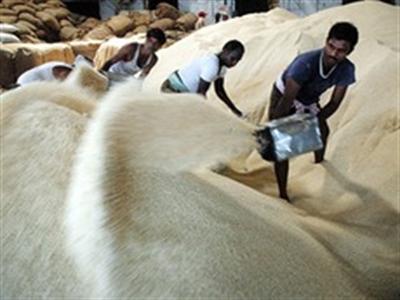 Xuất khẩu gạo của Ấn Độ cao kỷ lục nhờ cầu mạnh