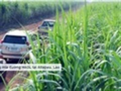 Mía đường cứu cánh, Hoàng Anh Gia Lai ước lãi 950 tỷ đồng năm 2013