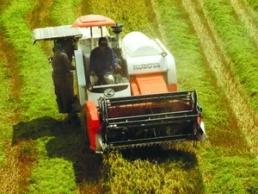 Malaysia đang đối mặt với mất dần đất nông nghiệp