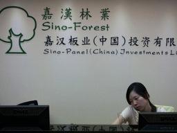 Công ty lâm sản khổng lồ Trung Quốc phá sản