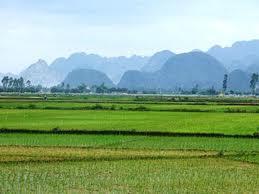 Đất nông nghiệp sẽ tiếp tục được cấp sổ đỏ