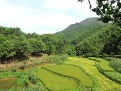 Doanh nghiệp nông lâm nghiệp ứng tiền đo đạc được giảm trừ vào tiền thuê đất