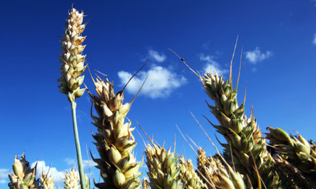 Giới đầu tư hào hứng với lĩnh vực nông nghiệp