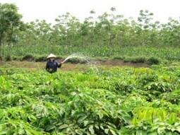 Thanh Hóa đẩy nhanh tiến độ trồng cao su năm 2012