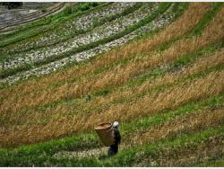Châu Á qua những thực tế thú vị của ngành nông nghiệp