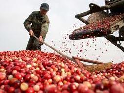 Xuất khẩu nông sản đạt gần 900 triệu USD tháng 5