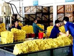 Xuất khẩu cao su vượt 1 tỷ USD 5 tháng đầu năm