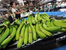 Trung Quốc nhập khẩu lại chuối Philippines bất chấp căng thẳng