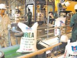 DPM cung cấp 130.000 tấn phân đạm trong tháng 6