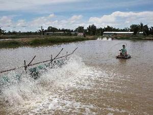 Lập quỹ hỗ trợ phát triển thủy sản cấp tỉnh đầu tiên