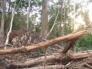 Sasco dùng trái phép 345ha đất rừng Bình Phước