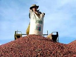 Cà phê của Việt Nam được chào bán cao hơn giá thế giới