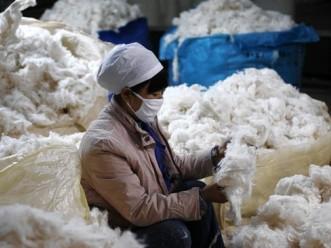 Giá bông tăng kịch trần do Trung Quốc tăng cường thu mua