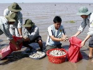 Cần 61.000 tỷ đồng phát triển ngành thủy sản đến 2020