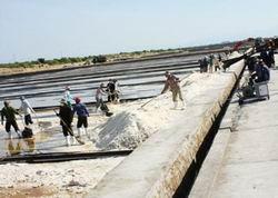 Giảm quy mô dự án Khu kinh tế muối công nghiệp Quán Thẻ