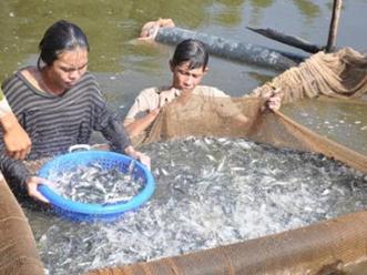 An Giang và Kandal hợp tác nuôi trồng thủy sản