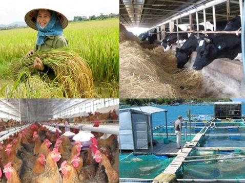 Sẽ hỗ trợ 100% phí bảo hiểm nông nghiệp cho hộ cận nghèo
