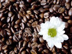 Giá cà phê robusta trong nước lên cao nhất 3 tháng