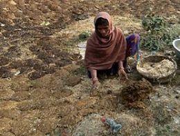 Hàng triệu người Ấn Độ đói kém do mất mùa