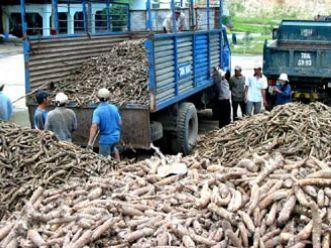Đẩy mạnh đàm phán để xuất khẩu sắn