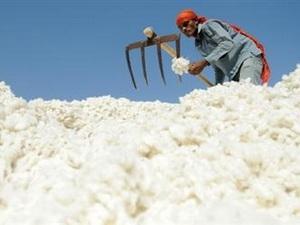 Doanh nghiệp Pakistan muốn bán nguyên liệu bông cho Việt Nam