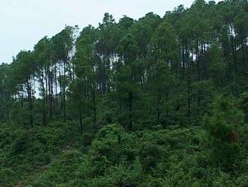 Đề nghị thu hồi trên 2.800ha đất rừng tại Bình Phước