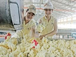 HRC đạt 64 tỷ đồng doanh thu tháng 6/2012