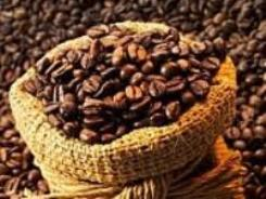 THV tham gia dự án 100 nghìn ha cà phê tại Angola