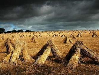 Sản lượng ngũ cốc của Nga có thể giảm mạnh do mưa nhiều