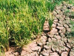 Hạn hán nghiêm trọng giữa mùa mưa ở Đắk Lắk